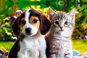 mascotas fotos