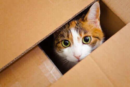 sesiones para mascotas gatos