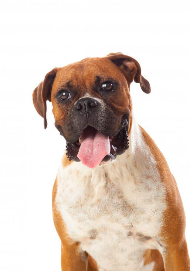 sesiones ara mascotas perros